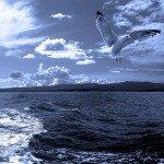 Музыка моря исцеляет сердца