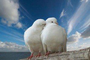 Приметы о птице - Народные приметы и суеверия