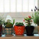 Магическое значение комнатных цветов