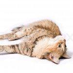 Какое имя подобрать коту – на счастье в доме