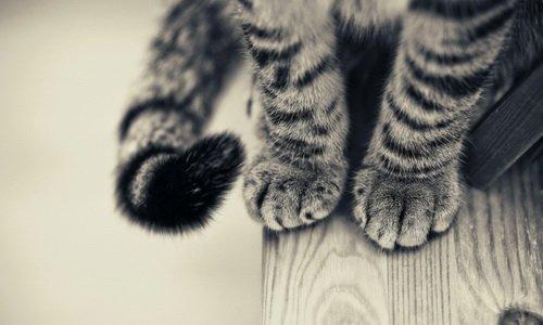 12.cat