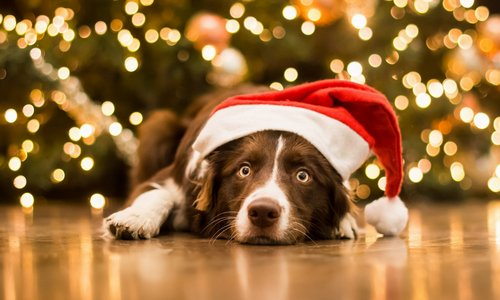 dog-face-view-cap-christmas-new-year