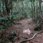 Японский лес самоубийц