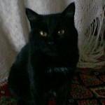 Каковы наиболее серьезные предрассудки в Восточной Европе: боятся ли славяне черных котов и пятницы тринадцатого?