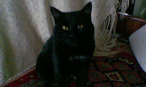 black-cat-photo