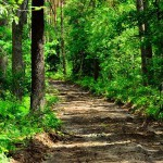 Страшная старушка с коляской пугает туристов в польских лесах