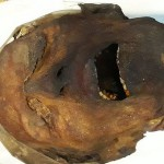 КТ помогла разгадать тайну мумии кричащей женщины