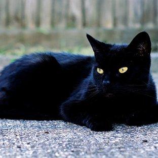 Почему не живут в доме долго коты