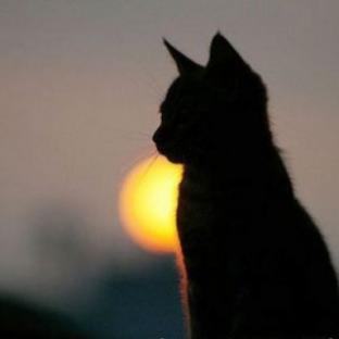 Что происходит с душа кота после смерти